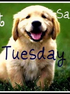 Pet Saving Tuesday Freebies Coupons And Tips Budget