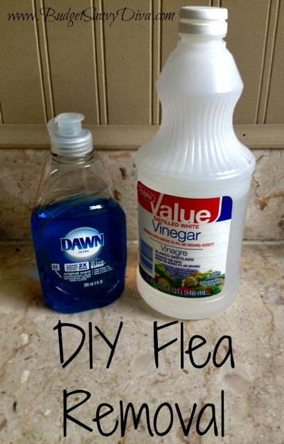 Diy Flea Removal Budget Savvy Diva