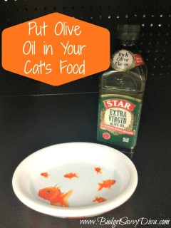 Olive Oil in Cat Food