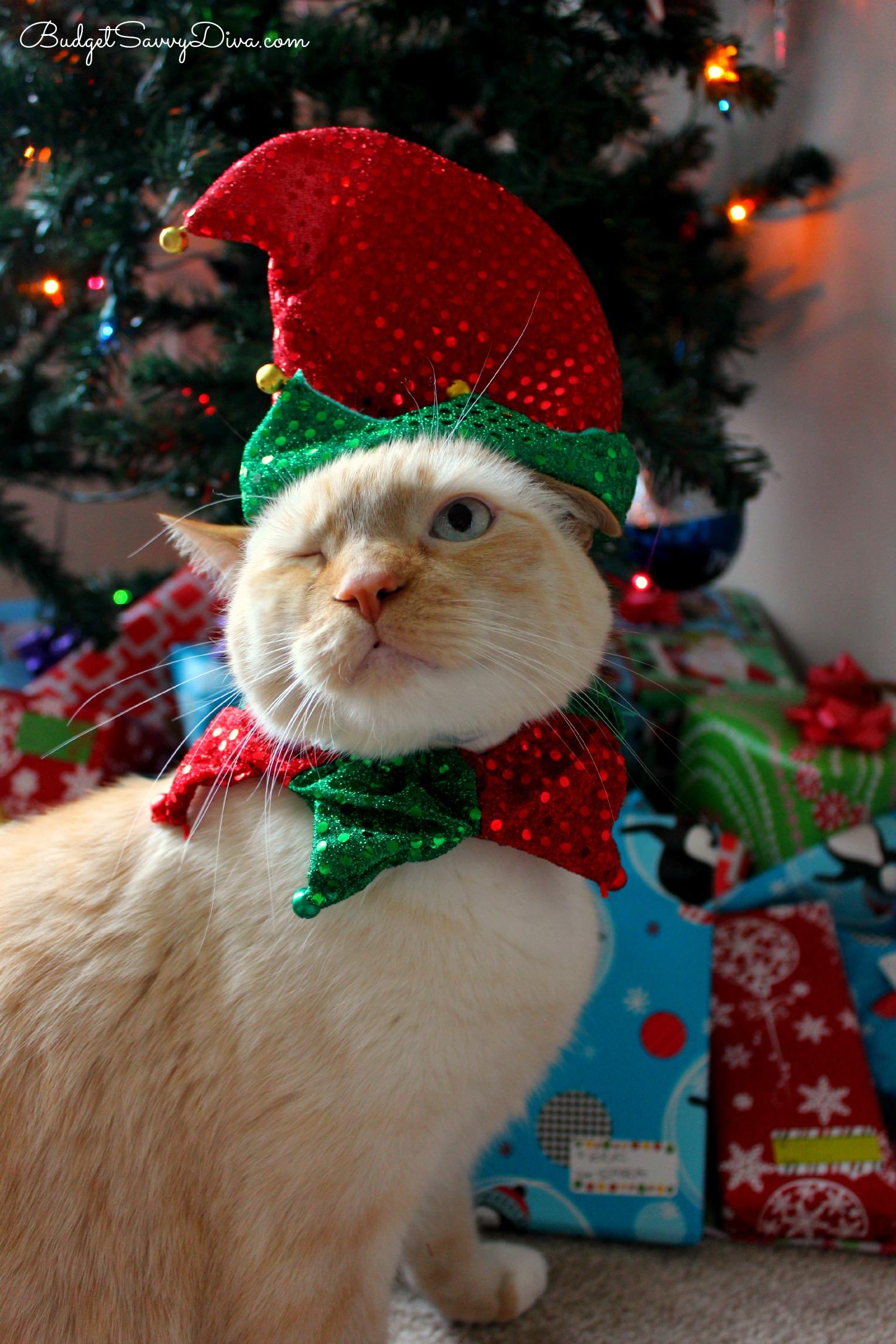 Petsmart Christmas Lookbook Budget Savvy Diva