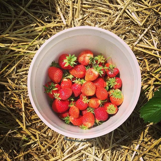 Watermelon and Strawberry Lemonade Drink Recipe
