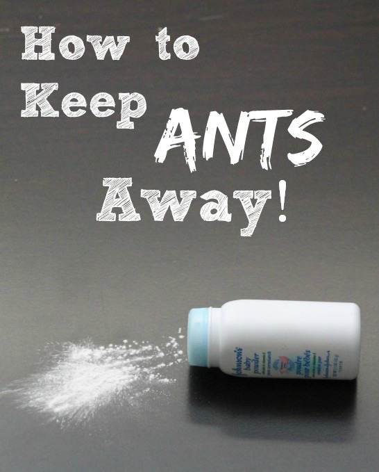 How To Keep Ants Away With Baby Powder Budget Savvy Diva