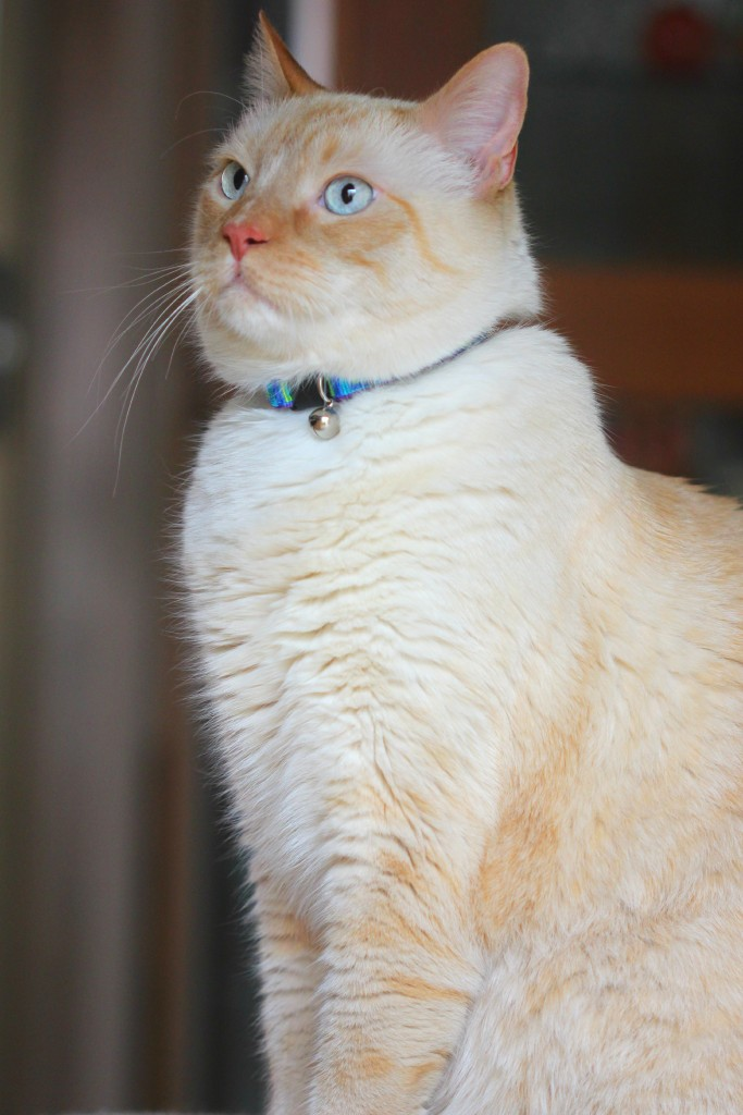 Watson Handsome