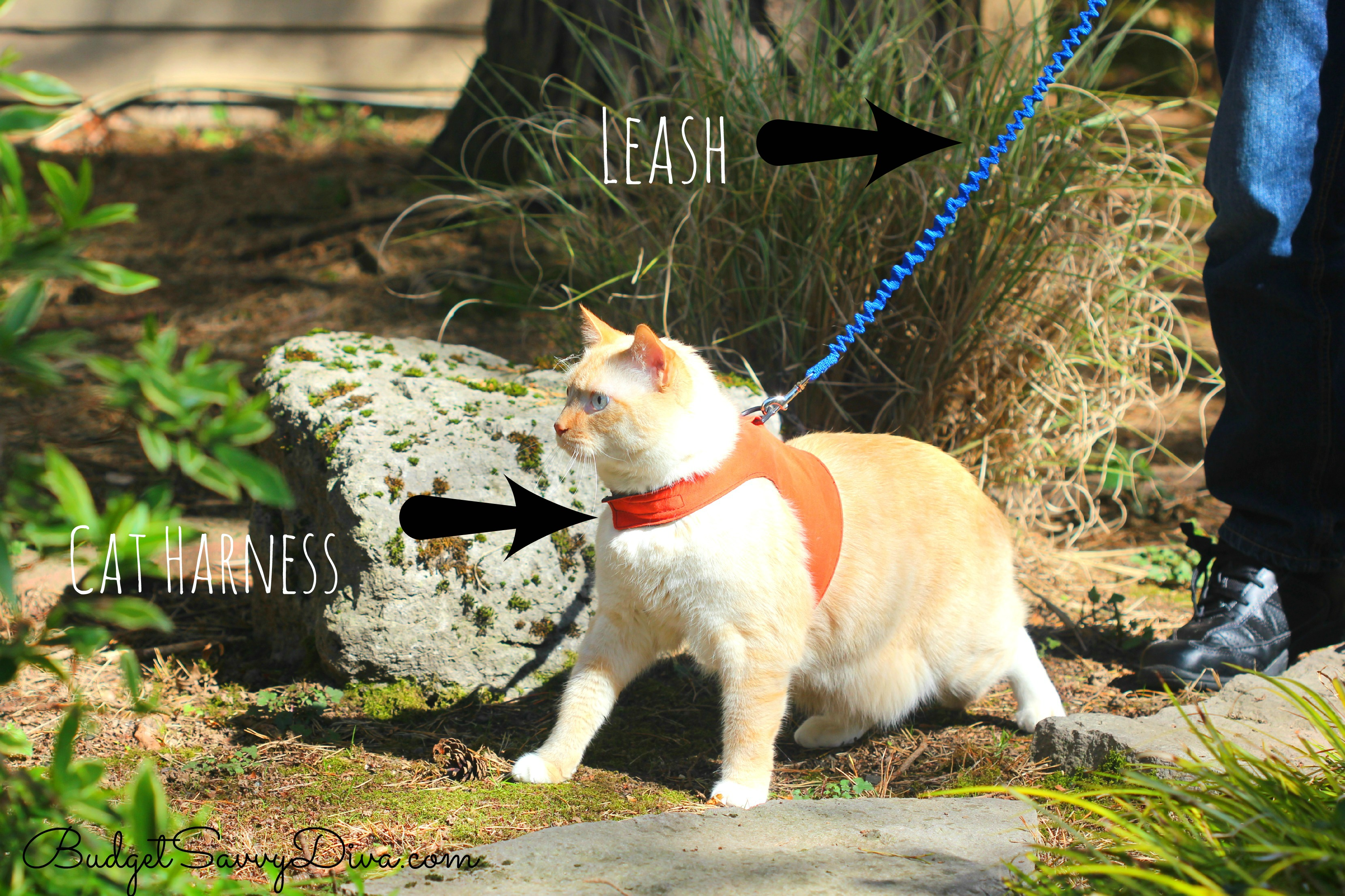 how to walk a cat on a leash beyondsummer budget savvy diva. Black Bedroom Furniture Sets. Home Design Ideas