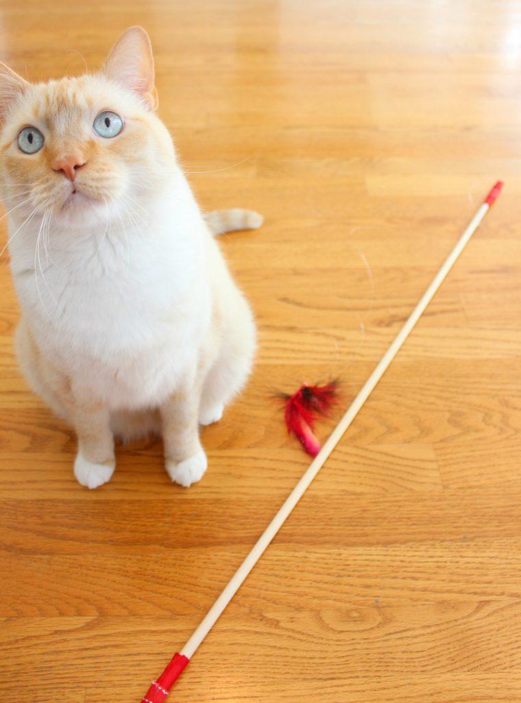 watson-cat-toy-2