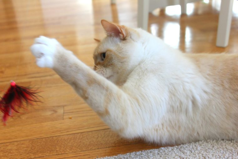 watson-cat-toy