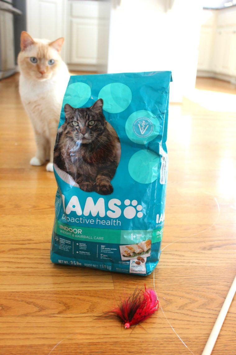 watson-iams-cat-toy