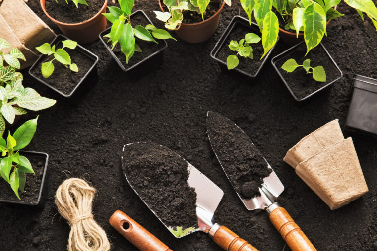 Gardening tools and plants