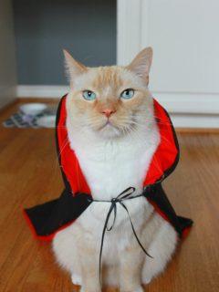 watson-halloween-costume