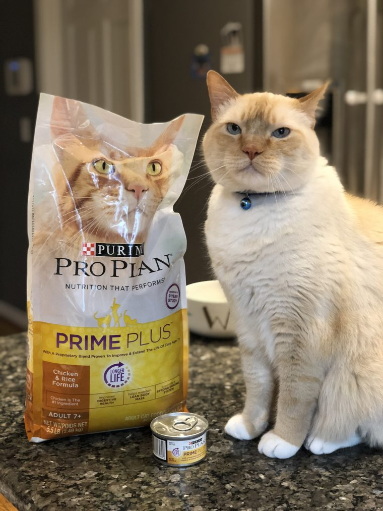 7 Year Old Cat Diet: New Purina Formula at PetSmart | Budget
